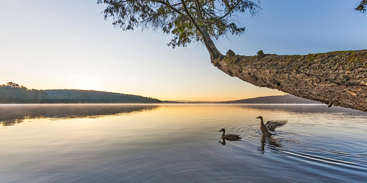 wilderness birds on lake of two rivers at dawn