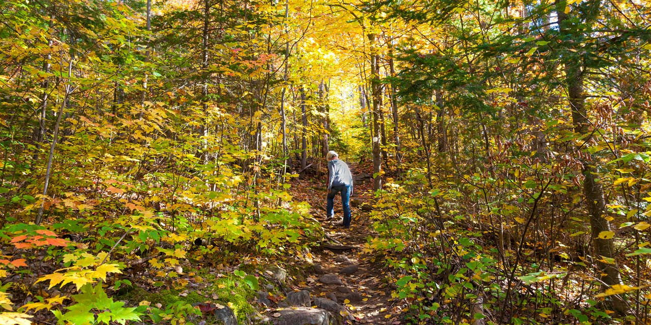 explore forests the the algonuin autumn colors