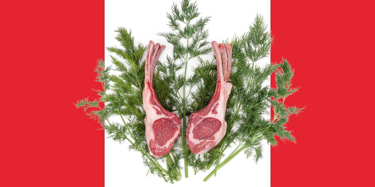 oh canadian lamb at the dinnner table