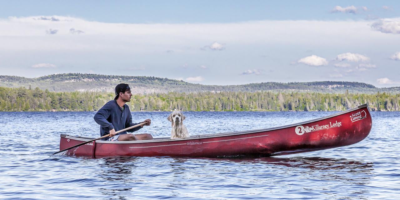 pet dogs friendly wilderness resort