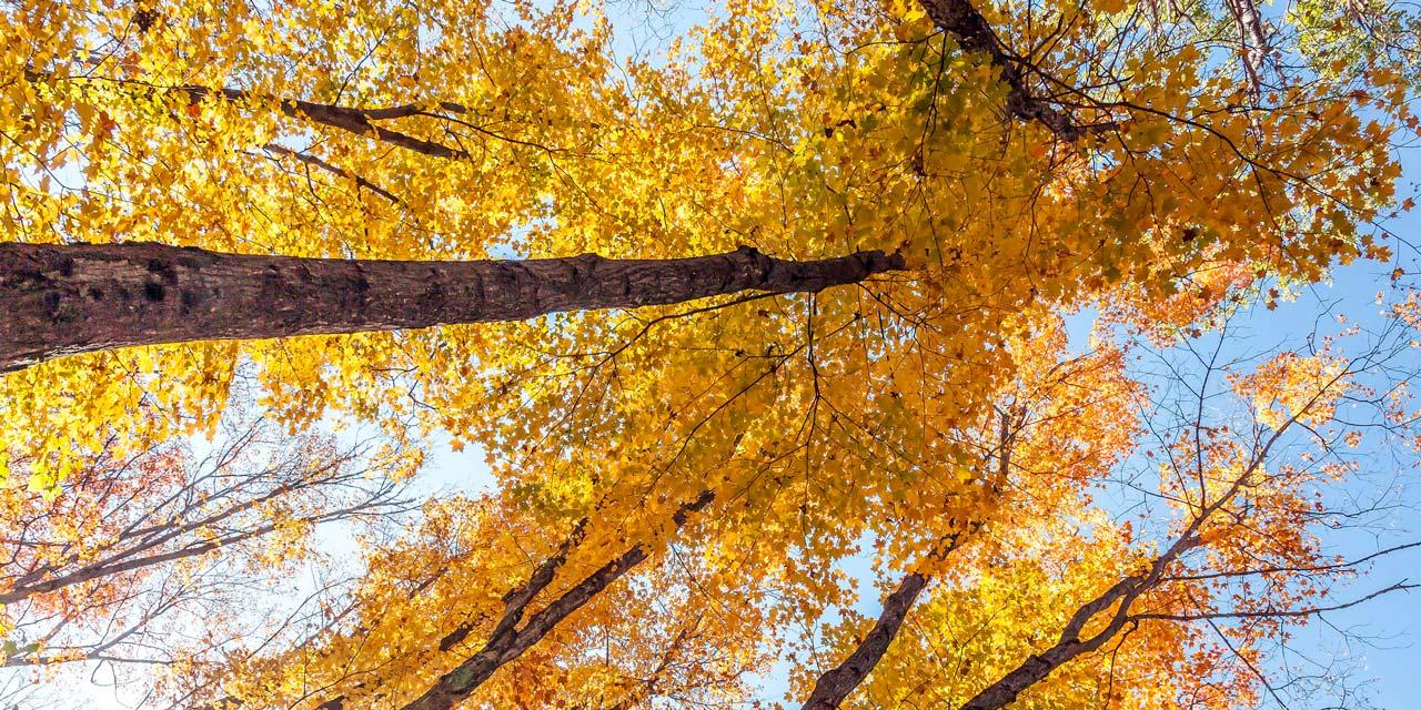 beautiful fall colours of Algonquin park
