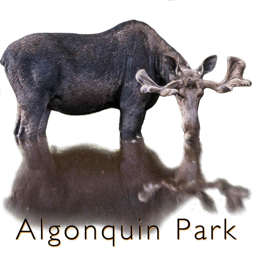 moose algonquin park link
